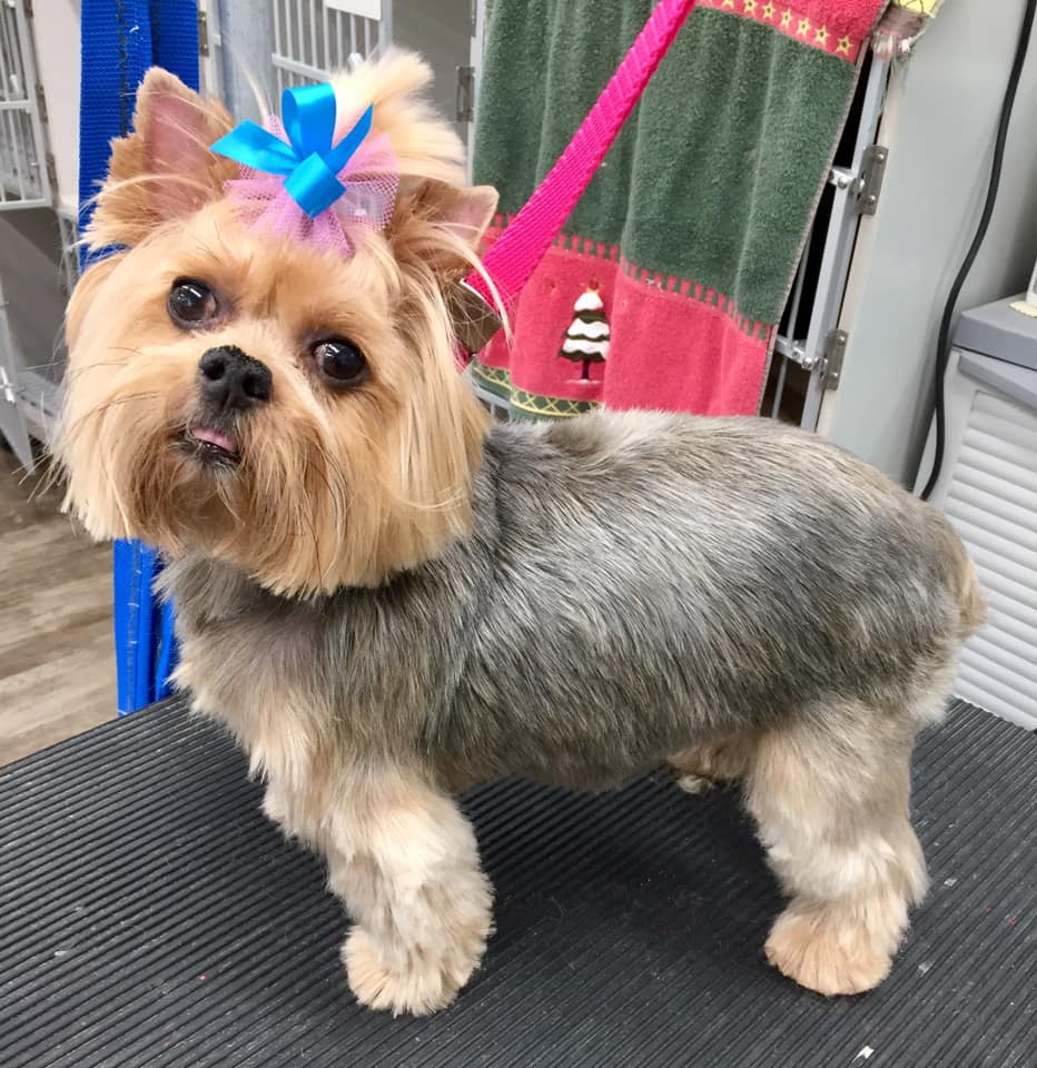 dog with bow on grooming table