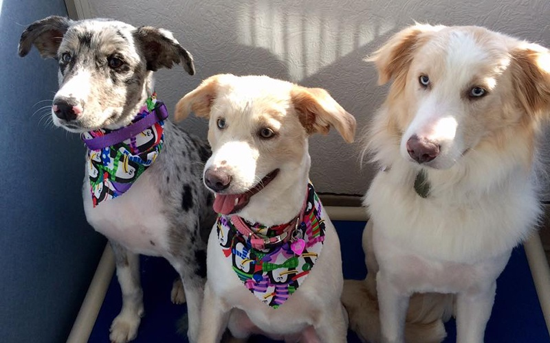 three dogs with bandanas