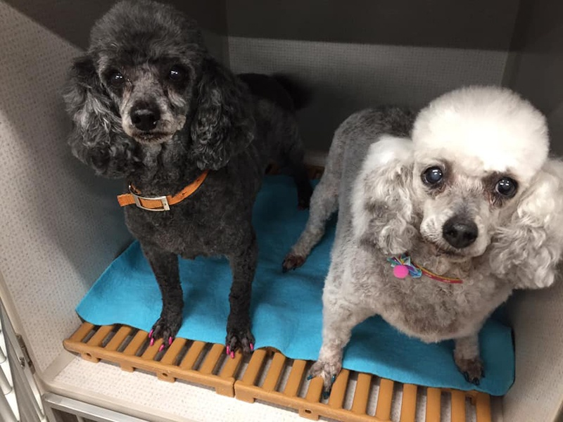 groomed dogs at facility