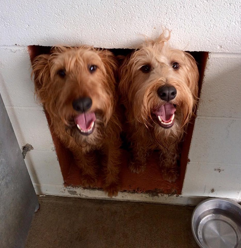 pair of dogs at kennel