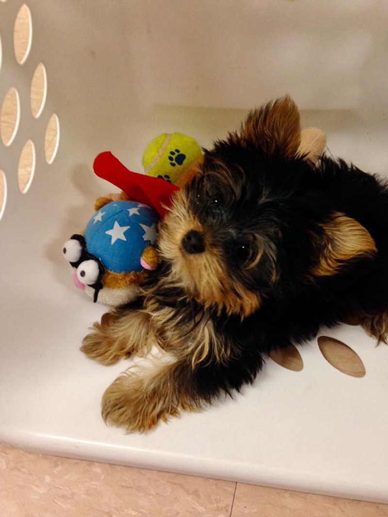 small dog at kennel