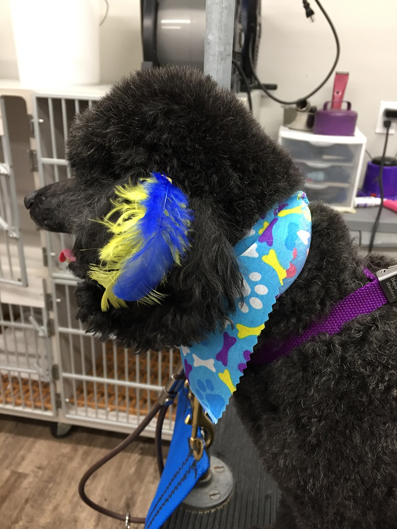 Dog after South Paw Bed & Bath grooming services